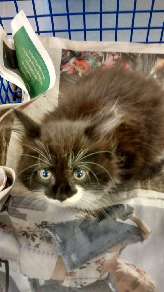 Kitten found in carrier bag